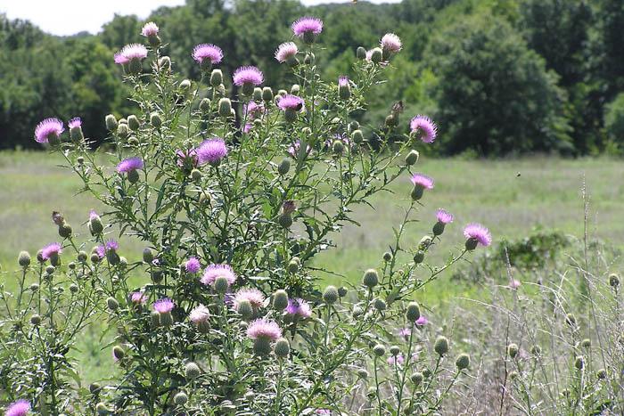July Wildflowers Lilygrass border=