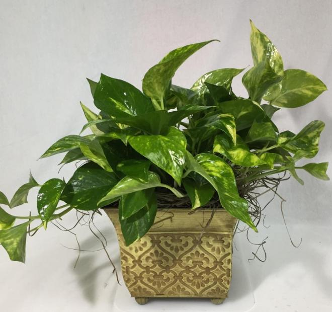 Caring for indoor potted plants | Lilygrass