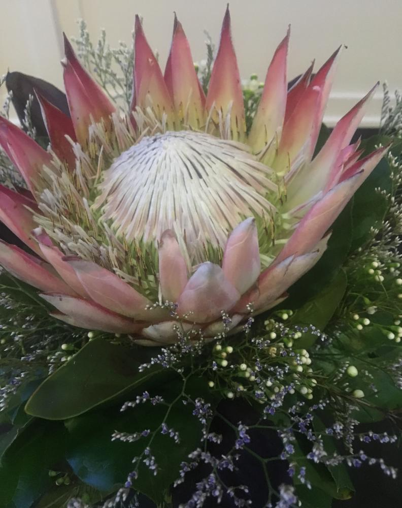 King Protea Lilygrass