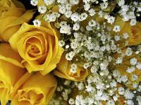 Flower spotlight: baby's breath