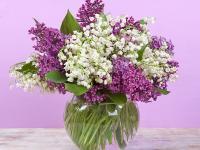 Flower Spotlight: Lilac