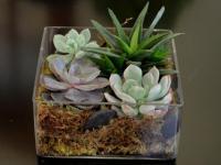 Flower spotlight: Succulents