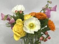 Flower spotlight: anemone
