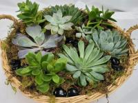 Caring for non-flowering plants and succulents