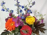 Flower spotlight: delphinium