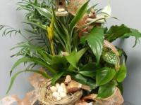 Making and caring for dish gardens