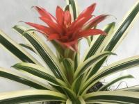 Plant Spotlight: Bromeliad