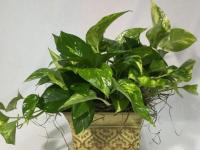 Caring for indoor potted plants