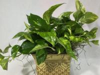 Tips for Caring for Houseplants