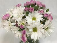 Flower spotlight: daisies
