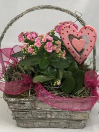 Valentine's Day plants green and blooming plants