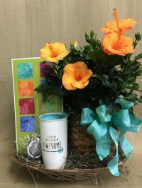 Potted Plant with Gift items