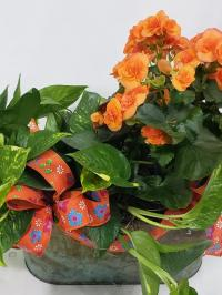 begonia and pothos ivy