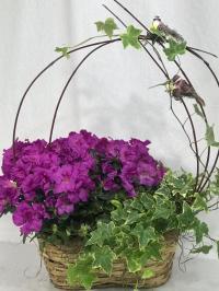 Azalea and english ivy