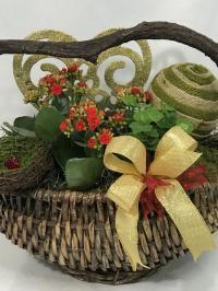 Kalanchoe and english ivy