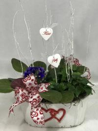 African Violet and English ivy
