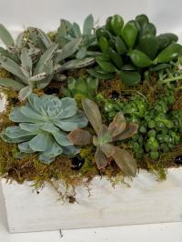 succulent dishgarden