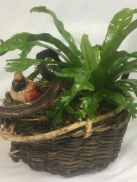 bird nest fern