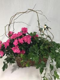 pink azalea and English ivy