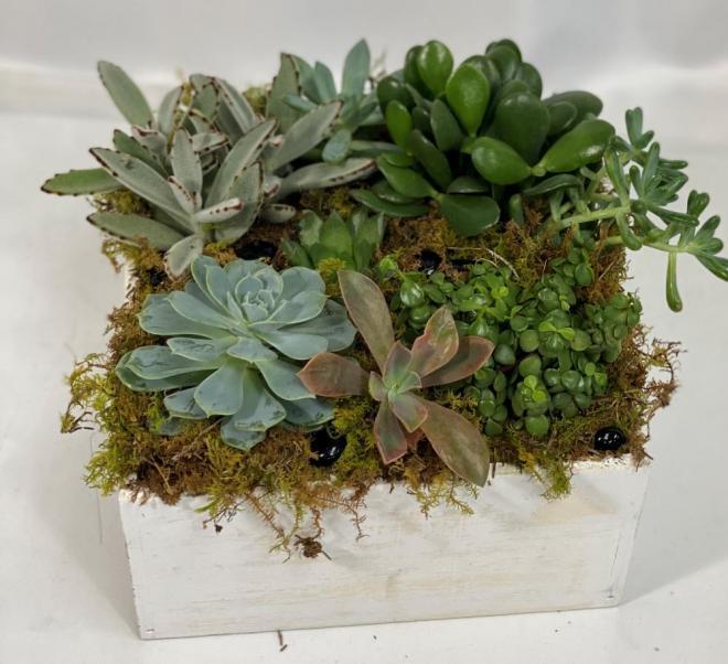 succulent dishgarden