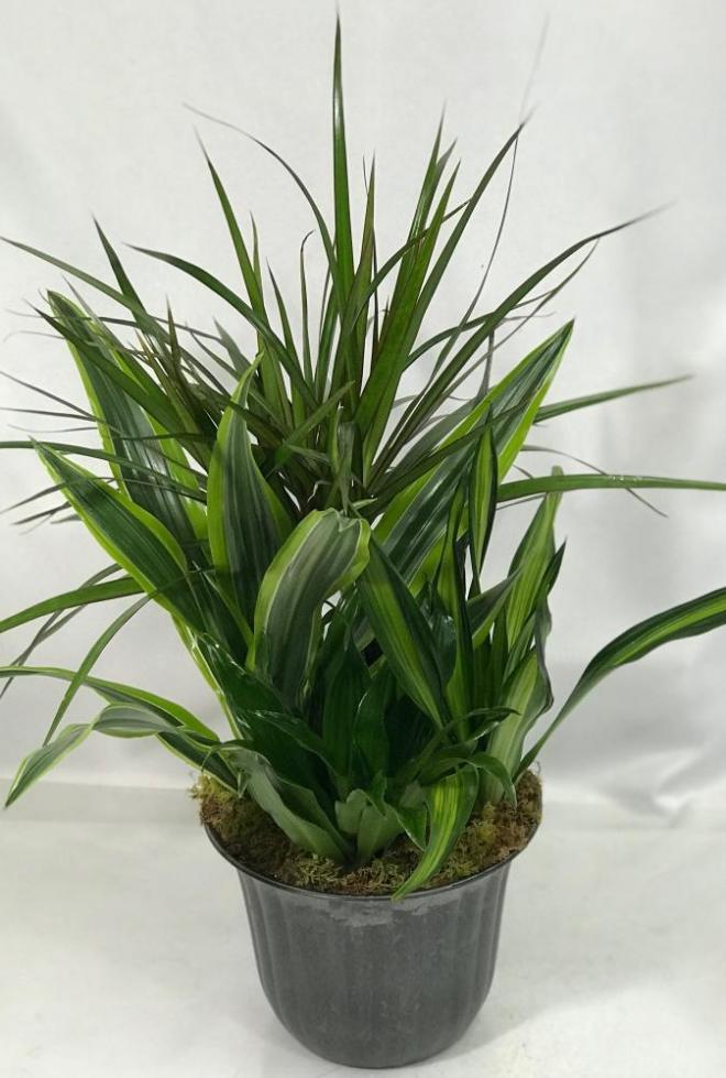 mixed plant