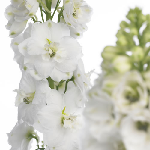 White flowers names and images choice image flower decoration ideas white flowers mightylinksfo autumn wedding themes lilygrass mightylinksfo mightylinksfo